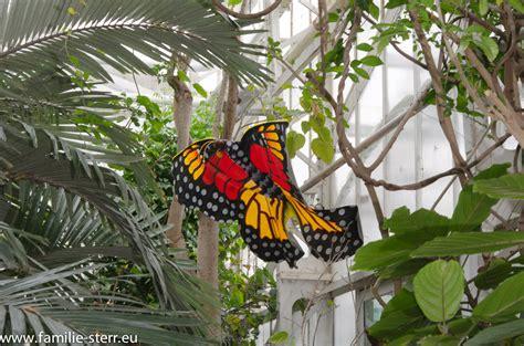 Botanischer Garten München Schmetterlinge by Schmetterlingsausstellung Im Botanischen Garten M 252 Nchen
