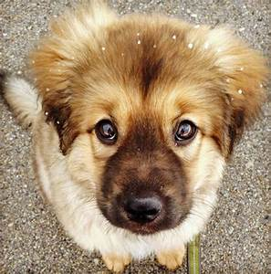 Beorn the Mixed Breed | Puppies | Daily Puppy