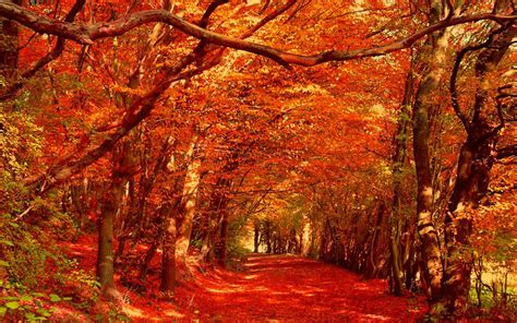 Autumn Themed Wallpapers For Android by Autumn Wallpaper Android Apps On Play