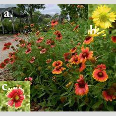 Best 20+ Florida Flowers Ideas On Pinterest Florida