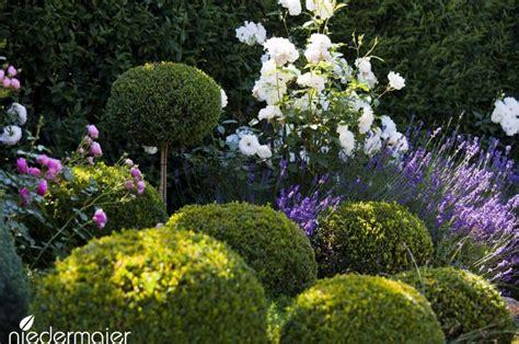 Garten Ideen Mit Lavendel by Lavendel Buchs Und Schatteng 228 Rten Garten Ideen