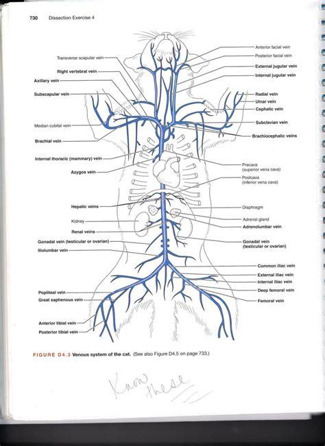cat arteries quiz jennifer kersey  portfolio bio