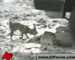 Dog Chihuahua Gif Find Share On Giphy