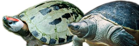 what color are the turtles do turtles change colors the fins