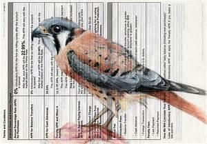 Birds On Paper  Mixed Media