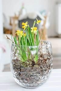 Frühlingsdeko Im Glas : 3 diy ideen wie du deine fr hjahrsbl her in szene setzt birkenzweige glasvase und narzissen ~ Orissabook.com Haus und Dekorationen