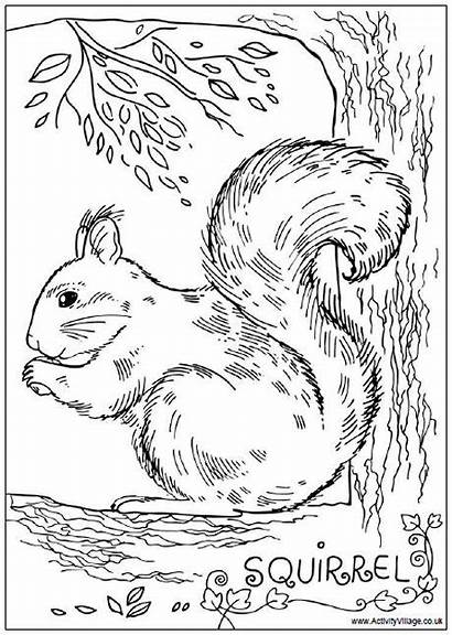 Squirrel Colouring Squirrels Animals Activity Coloring Pages