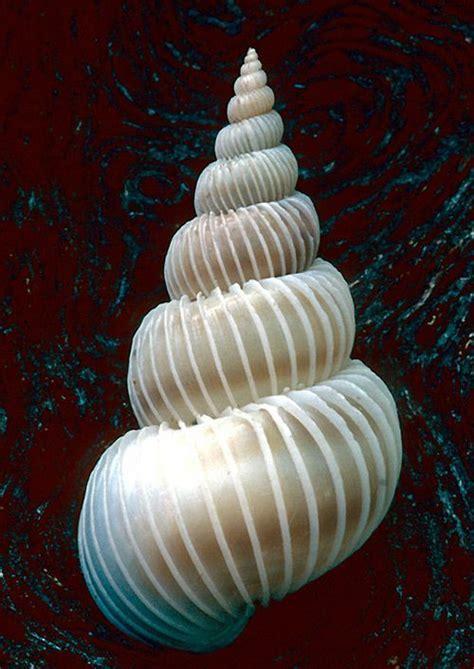 beautiful images  seashells shells sea shells sea