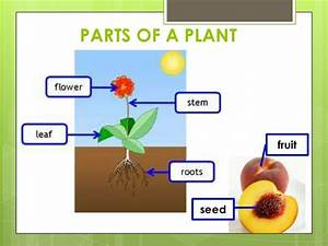 Science - Plants And Seeds