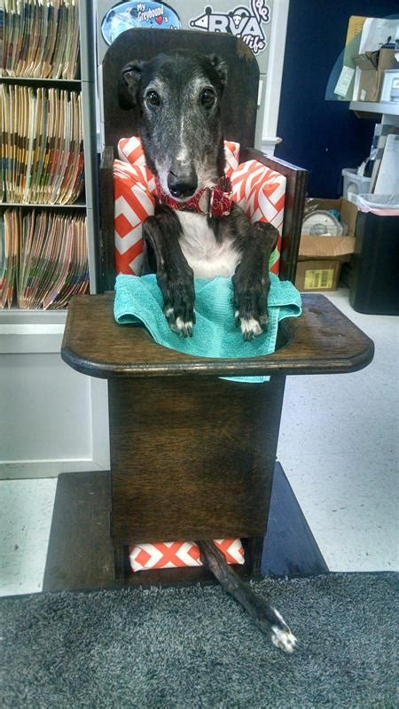 bailey chair  dogs buildsomethingcom