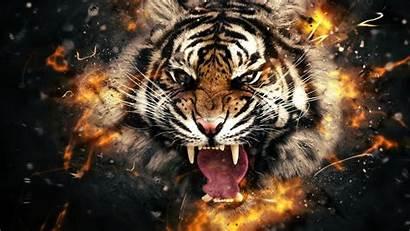 4k Fire Wallpapers Tiger Resolution Pub Head