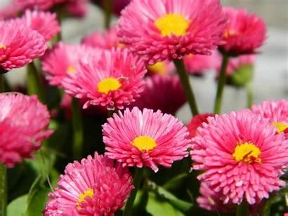 Flowers Pink Macro Panoramio Wikimedia Commons Wikipedia
