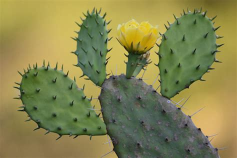 indoor plant food cactus varieties for cold weather climates organic authority