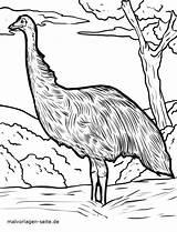Coloring Emu Popular sketch template