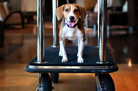 hotels that are pet friendly 9 pet friendly hotel chains smartertravel