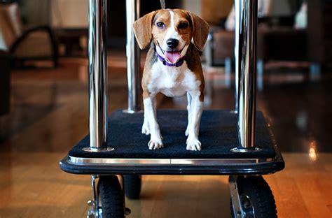 9 Petfriendly Hotel Chains Smartertravel