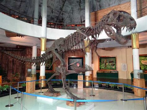 Were Dinosaurs Real? Using Fossils To Uncover The Past