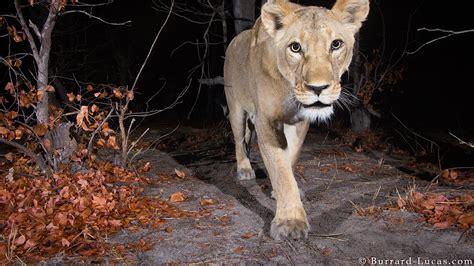 Elusive African Animals Caught on Camera (PHOTOS) The
