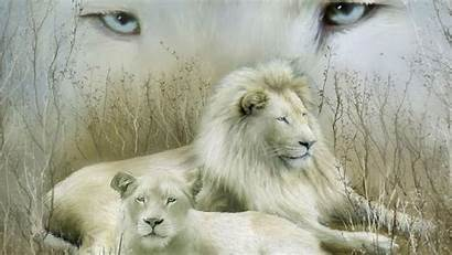 Lion Cool Wallpapers Desktop