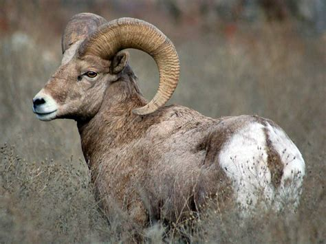 support closure   usda agriculuture research sheep