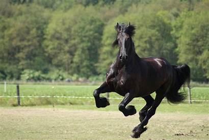 Horse Horses 1080p Wallpapers Widescreen 4k Desktop