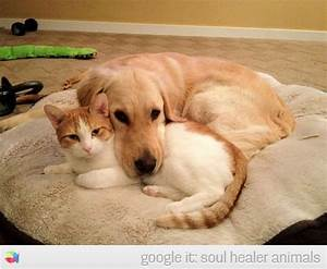 Cute cat and dog laying together on a soft bed | Soul ...