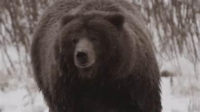 Bear Brown Bears Rock Mc Unsupervised Stupid