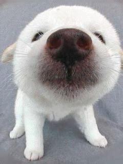 gifs qui leche animes images chien qui leche