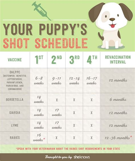 canine distemper virus  ultimate dog owners guide