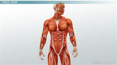 Diagnostics Related to the Muscular System - Video