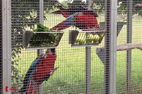 gabbie per pappagalli inseparabili vpl gabbie voliere modulari e camere termiche