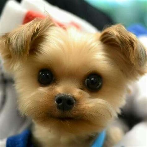 Best 25 Cute Fluffy Puppies Ideas On Pinterest