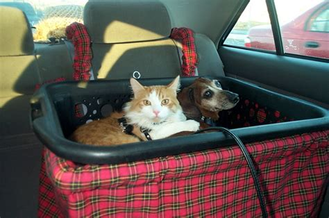 This Is Taz The Cat And Zack Traveling With Us In Thier