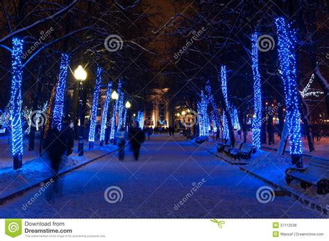 christmas lights on trees in winter park stock photo