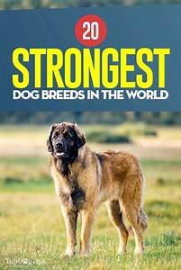strongest dog breeds 2017 - Dogs Breed Sierramichelsslettvet