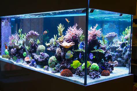 cuve aquarium eau de mer aquarium lighting basics the for led fixtures