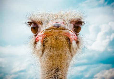 15 African Animals That Are So Ugly They're (Almost) Cute