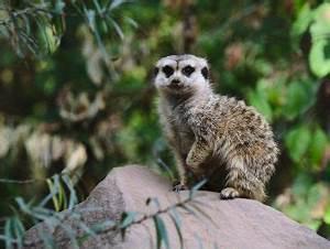 Frosch Als Haustier : haustiere f r fortgeschrittene exotische mitbewohner artgerecht halten ~ Buech-reservation.com Haus und Dekorationen