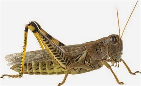 Sistem Imunitas pada Hewan Invertebrata - Info Pendidikan ...