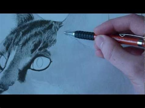 draw animal fur cats youtube