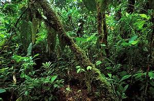 tropical rainforest | Climate, Animals, & Facts ...