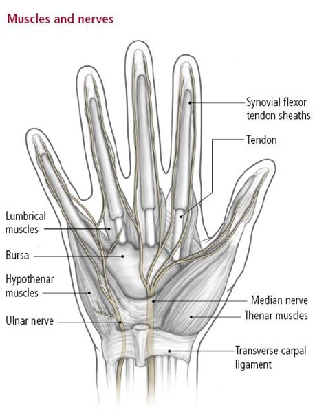 Have Muscles Our Fingers Ask Doctor