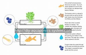 Indoor Aquaponics System For Sale  With Images