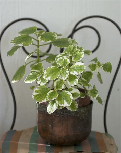 pretty house plants 5 easy house plants 187 the merrythought