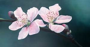 Cherry blossom - Oil painting by Ele-Art on DeviantArt