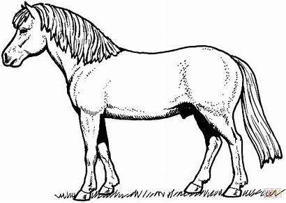 Horse Printable Coloring Supercoloring Activity Via