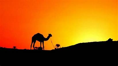 Egypt Wallpapers Definition Desert Sunset Camel Camels