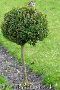 Buchsbaum Rund Schneiden : buchsbaum schneiden wann wie buchs vermehren stecklinge pflege buchshecke buchsbaumschnitt ~ Frokenaadalensverden.com Haus und Dekorationen
