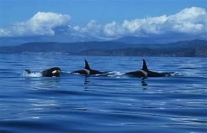 Fragen Zum Wasser : fragen zum thema orcas und delfine in gefangenschaft wal ~ Lizthompson.info Haus und Dekorationen