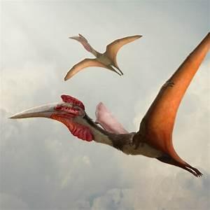 Quetzalcoatlus - giant winged predator | Dinosaurs in the Wild  Quetzalcoatlus